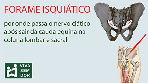 forame-isquiatico-vivasemdor