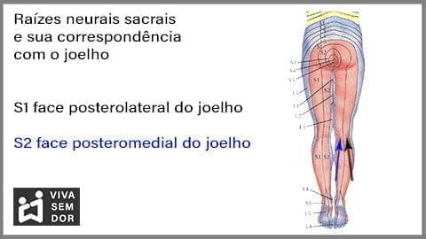 inervacao-sacral-do-joelho-vivasemdor